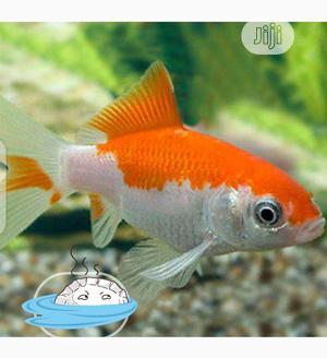 Subunki Fish | Fish for sale in Oyo State, Ibadan