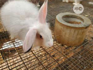Angora Rabbit Breed Mature   Livestock & Poultry for sale in Osun State, Osogbo