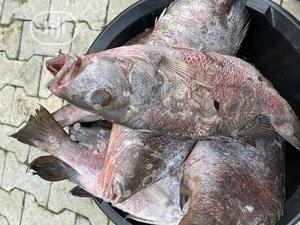Fresh Redsnapper Fish   Meals & Drinks for sale in Abuja (FCT) State, Gwarinpa