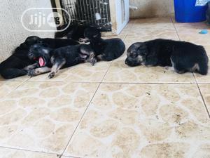 0-1 Month Female Purebred German Shepherd | Dogs & Puppies for sale in Ogun State, Abeokuta North