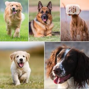 6-12 Month Female Purebred German Shepherd   Dogs & Puppies for sale in Rivers State, Port-Harcourt