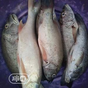 Fresh Fish For Sale,   Meals & Drinks for sale in Lagos State, Kosofe