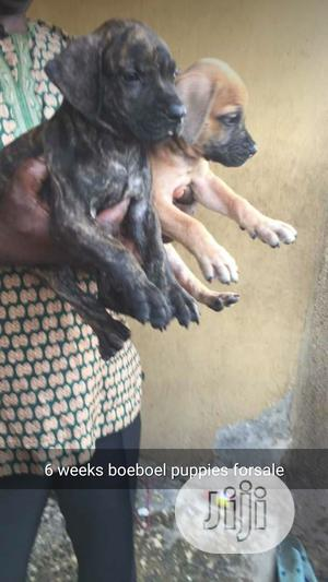 1-3 month Female Purebred Boerboel | Dogs & Puppies for sale in Lagos State, Ikotun/Igando