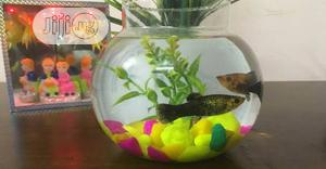3 Liters Fish-Bowl Aquarium Basic Kit + 2 Fishes | Fish for sale in Lagos State, Surulere