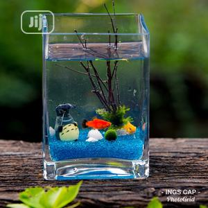 Square Fish-bowl Kit + 2 Fishes   Fish for sale in Lagos State, Surulere