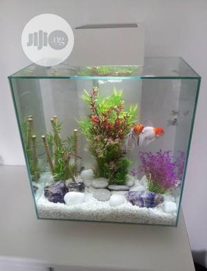 Complete Aquarium Plus Fishes - Instant Delivery | Fish for sale in Lagos State