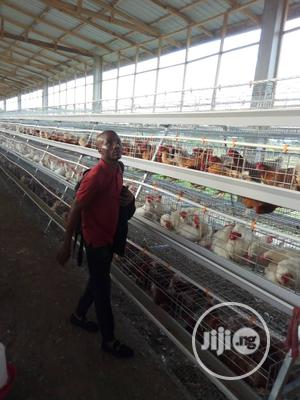 China Factory Poultry Cage / Automatic Poultry Cages | Farm Machinery & Equipment for sale in Akwa Ibom State, Ukanafun