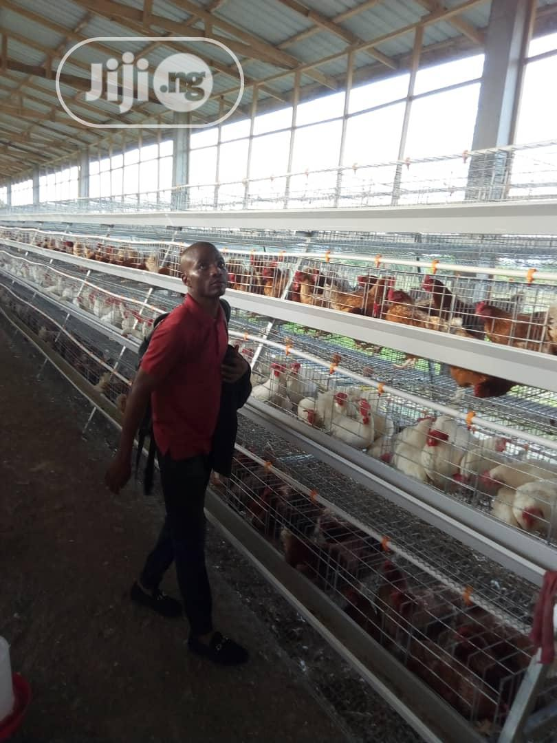China Factory Poultry Cage / Automatic Poultry Cages