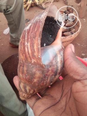 Edible Snails for Sale | Other Animals for sale in Ogun State, Ado-Odo/Ota