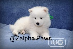 1-3 Month Female Purebred American Eskimo | Dogs & Puppies for sale in Lagos State, Isolo