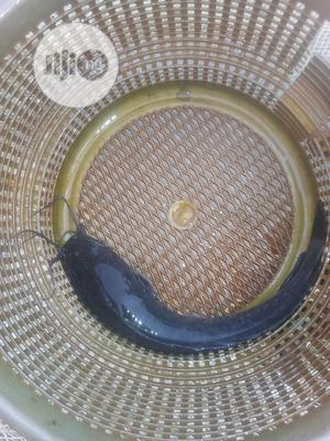 Catfish (Fingerlings, Juvenile, Jumbo) | Meals & Drinks for sale in Lagos State, Ojo