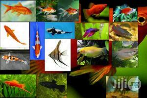 Aquarium Fishes | Fish for sale in Lagos State
