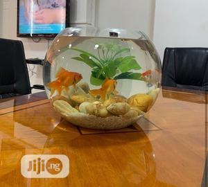 Fish Bowl Available   Fish for sale in Lagos State, Lekki