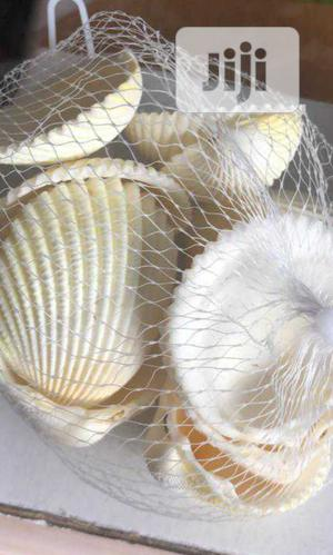 Aquarium Shell Available for Sale   Pet's Accessories for sale in Lagos State, Surulere