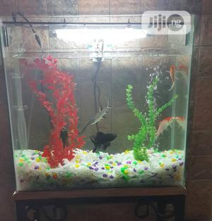 Medium Size Complete Set Aquarium. | Fish for sale in Lagos State, Apapa
