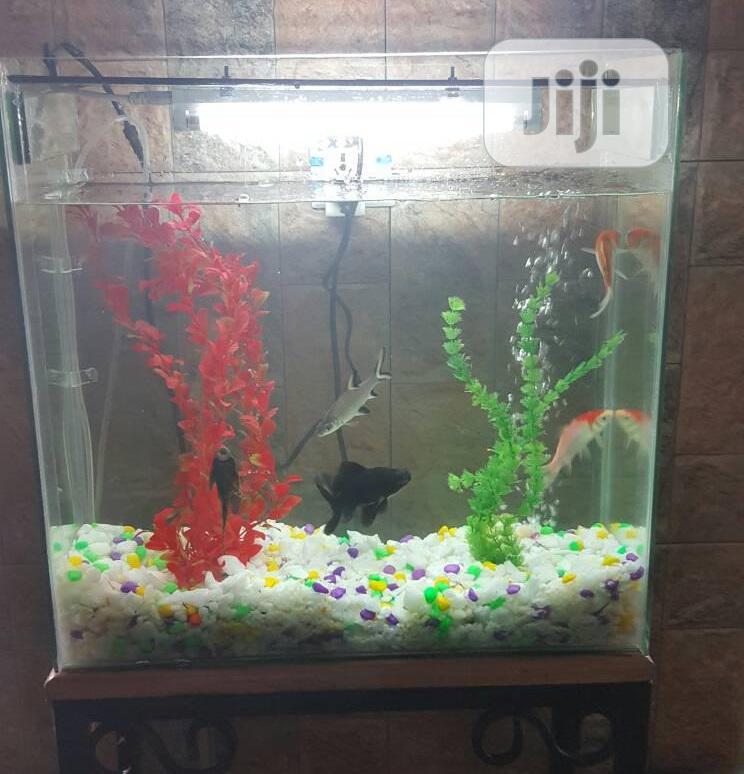Medium Size Complete Set Aquarium.