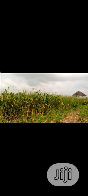 5 Plots of Land for Sale in Festac Town | Land & Plots For Sale for sale in Amuwo-Odofin, Festac