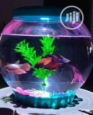 Office and House Bowl   Fish for sale in Lagos State, Surulere