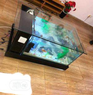 Aquarium, Fishes And Accessories | Fish for sale in Lagos State, Surulere