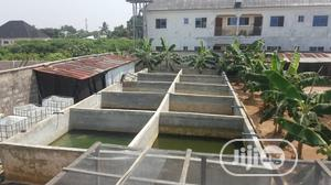 Fish Farm for Rent | Commercial Property For Rent for sale in Rivers State, Obio-Akpor