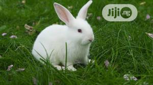 Rabbits for Sale | Livestock & Poultry for sale in Akwa Ibom State, Uyo