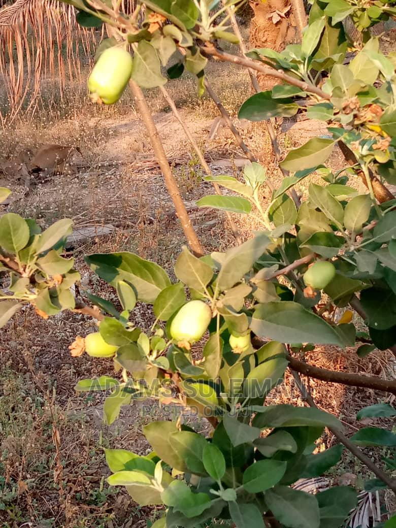 Archive: Apple Seedling