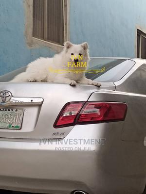 Stud(Mating) Services | Pet Services for sale in Lagos State, Agboyi/Ketu