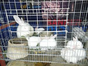 Hyla Weaners Rabbit | Livestock & Poultry for sale in Oyo State, Ibadan
