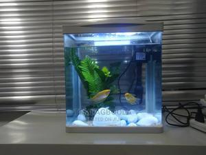 Mini Aquarium | Fish for sale in Lagos State, Ikeja