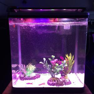 Curve Mini Aquarium | Fish for sale in Lagos State, Victoria Island