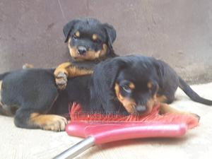 6-12 Month Female Purebred Rottweiler | Dogs & Puppies for sale in Ogun State, Ado-Odo/Ota