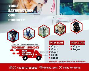 Pets Transit | Pet Services for sale in Oyo State, Ibadan