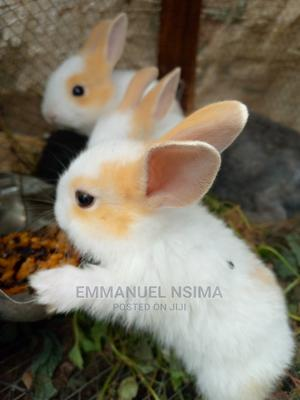 GOE Animals - Matured Rabbits For Sale | Livestock & Poultry for sale in Ondo State, Akure
