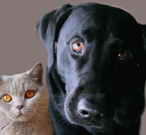 Veterinary Services   Pet Services for sale in Oyo State, Ibadan