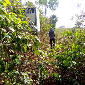 Farmland for Sale   Land & Plots For Sale for sale in Ogun State, Ewekoro