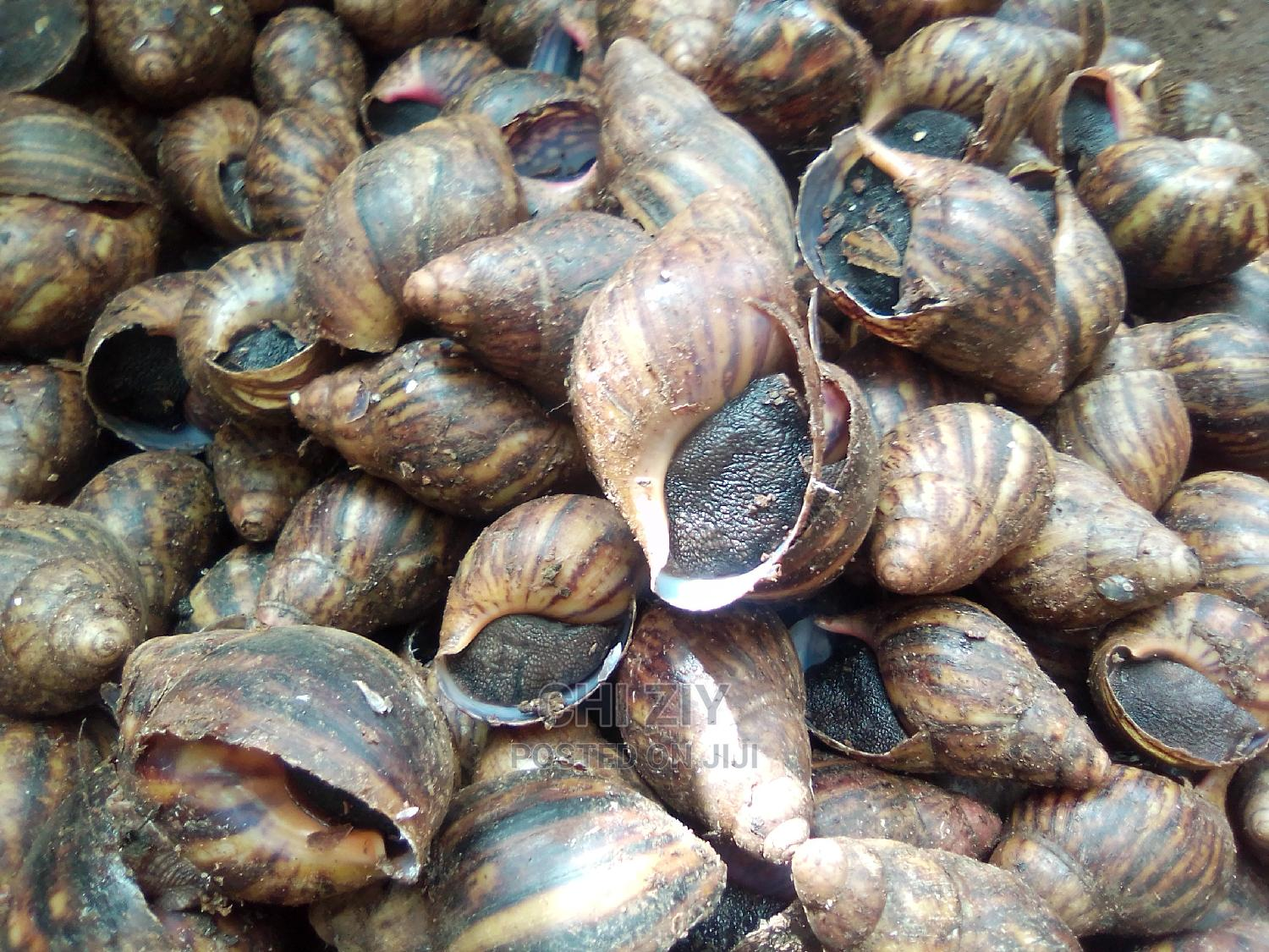 Healthy Snails for Sales | Other Animals for sale in Ado-Odo/Ota, Ogun State, Nigeria