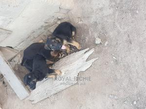 1-3 Month Male Purebred German Shepherd | Dogs & Puppies for sale in Ekiti State, Ado Ekiti