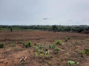 Fertile Farm Land for Sale Beside Alaro City   Land & Plots For Sale for sale in Ibeju, Elerangbe