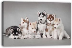 1-3 Month Male Purebred Siberian Husky | Dogs & Puppies for sale in Lagos State, Surulere