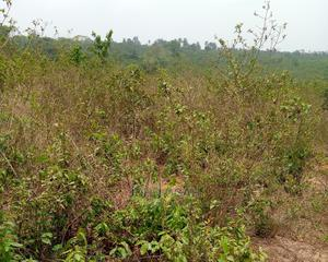Registered Survey and Receipt   Land & Plots For Sale for sale in Imo State, Okigwe