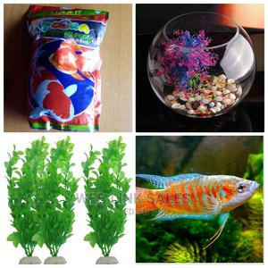 Full Kit Fish Bowl and A   Fish for sale in Lagos State, Surulere