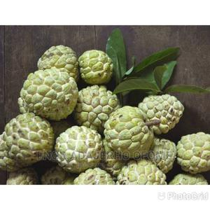 Custard Apple Seedlings for Sale | Feeds, Supplements & Seeds for sale in Delta State, Warri