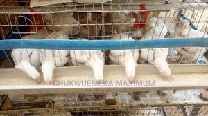 Battery Cage for Poultry Birds | Farm Machinery & Equipment for sale in Abuja (FCT) State, Kubwa