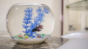 Glass Fish Bowl   Fish for sale in Lagos State, Ajah