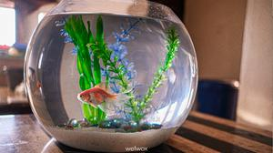 Glass Fish Bowl Large   Fish for sale in Lagos State, Ajah