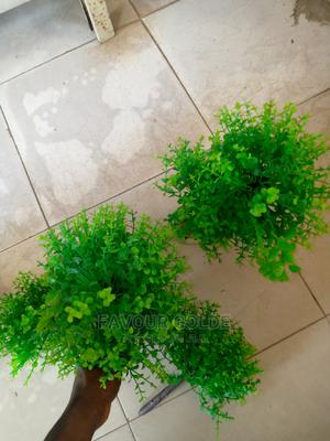 Green Plants For Aquarium | Fish for sale in Lagos State, Surulere