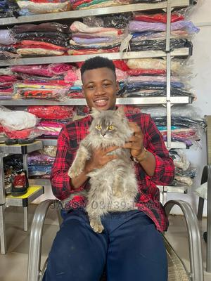 1-3 Month Male Purebred Siberian   Cats & Kittens for sale in Lagos State, Ikoyi
