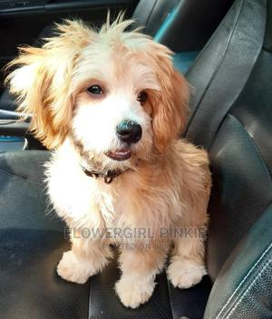 Let Me Walk Your Doggie   Pet Services for sale in Lagos State, Magodo