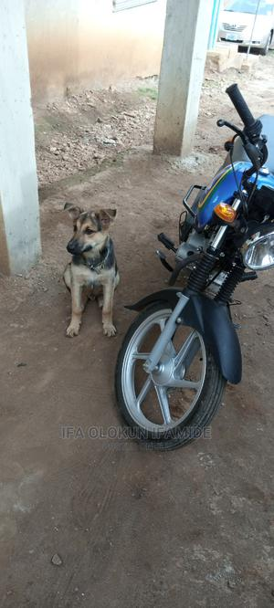 Honda CG110 2019 Blue   Motorcycles & Scooters for sale in Ondo State, Akure