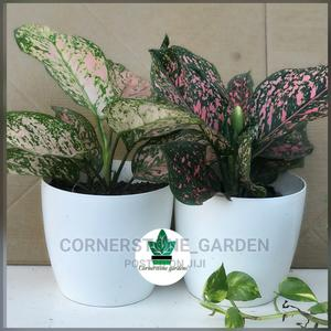 Indoor Plant -Balcony | Garden for sale in Abuja (FCT) State, Maitama